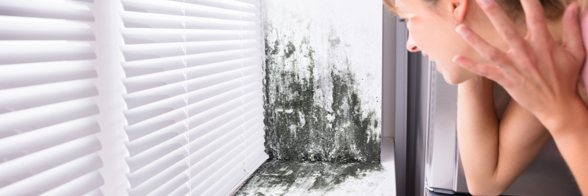 Who Should Be Worried About Mold After a Hurricane?